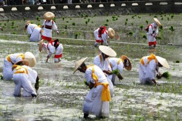 Otaue Rice Planting Festival in Osaka