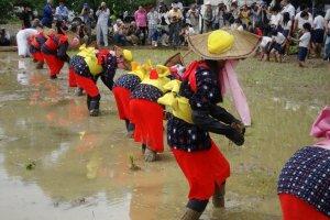 Arao Rice Planting Festival in Kyushu
