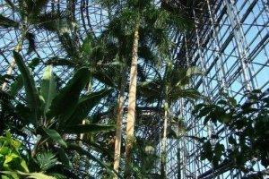 全真模拟热带雨林环境