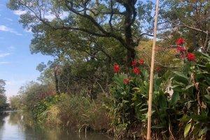 Die Ufer sind gesäumt von Blumen und Bäumen.