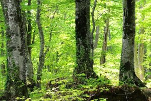 The sublime forests