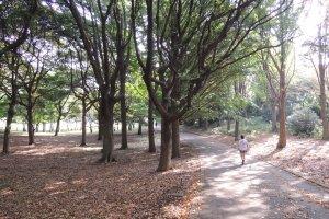 Jogger in Negishi Shinrin Park