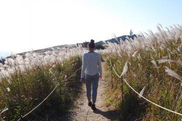 Highlight of the trip: silver grass on Oishi Kogen Highland