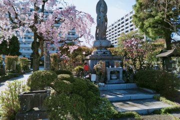 Rinko-in Temple with cherry blossom