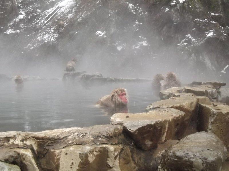 It's not far to the snow monkeys' onsen