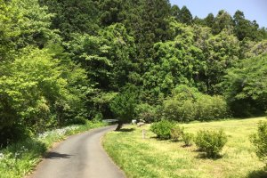 The road to Gojo Falls