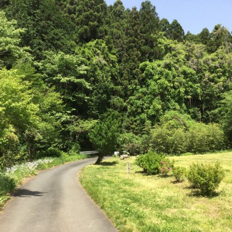Hiking From Musashi-Yokote to Koma