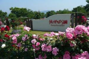 Kanoya Rose Garden, Kagoshima