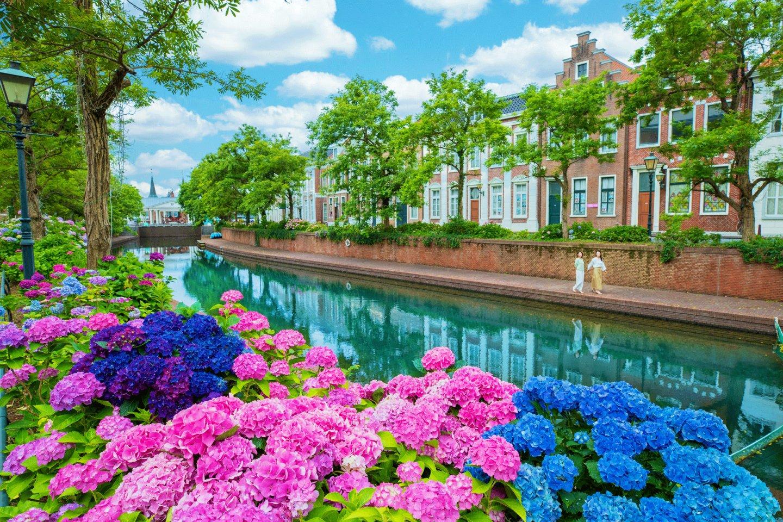 Take a walk along the hydrangea canal