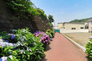 Takinogawa Hydrangea Road about one third along