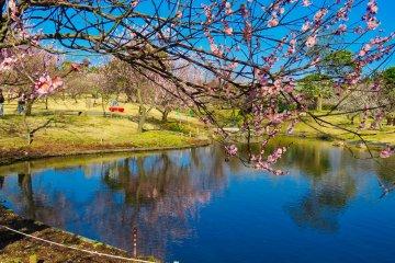Odawara Flower Garden Plum Trees