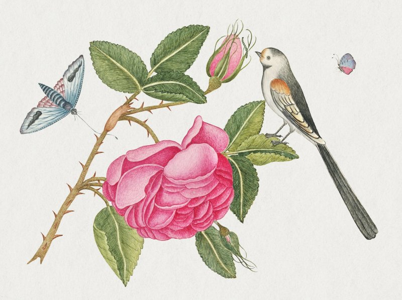 Botanical works inspired by the Kew Gardens are the focus of this event