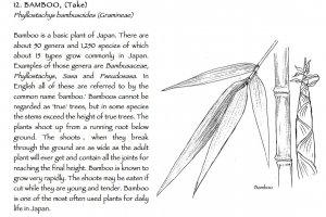 Take or bamboo