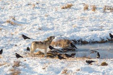Hunters on Land