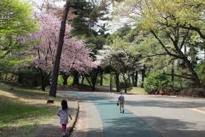 Wide footpaths and running track lined with cherry blossoms