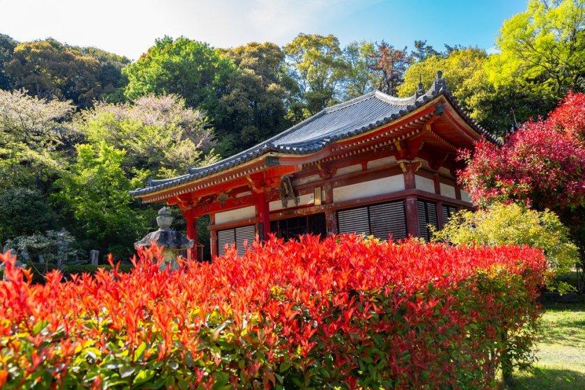Kanonji in April