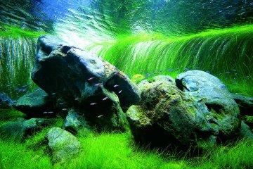 Nature Aquarium Exhibition