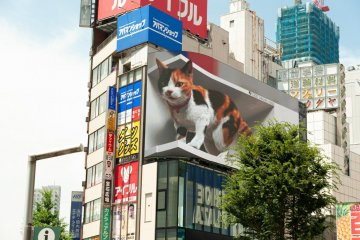 Giant Cat Wins the Hearts of Many in Shinjuku