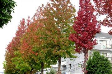 Trees in Sendai in mid-October