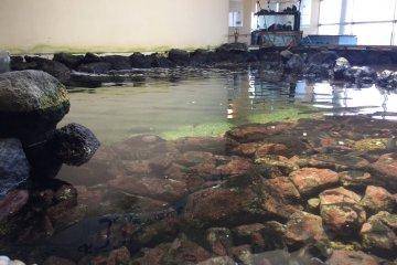 Nagisa Seaside Plaza's aquarium