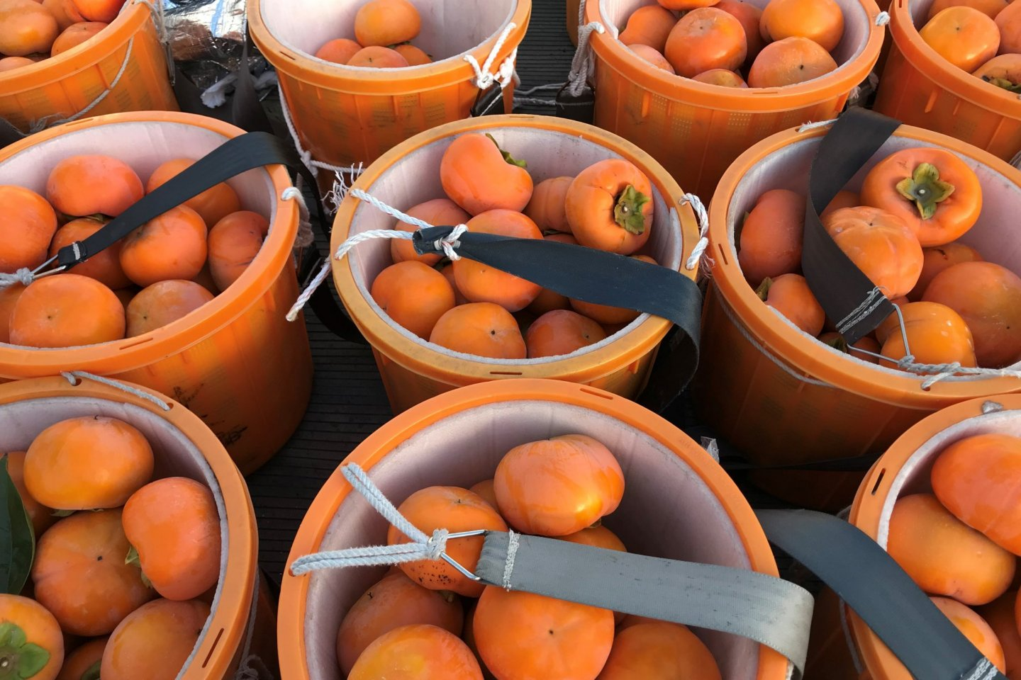 Buckets full of perfect persimmon