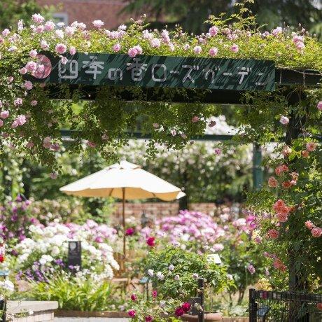 Shiki no Kaori Rose Garden Autumn Festival