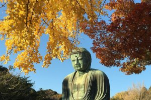 Kōtoku-in Temple is popular year-round, but autumn adds an extra something special