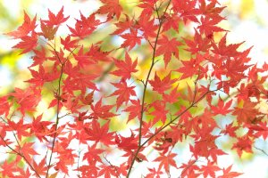 5 Spots for Fall Color in Kanagawa