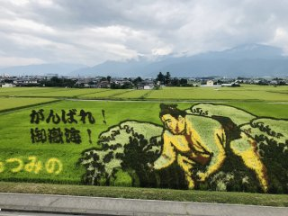 Картина на рисовом поле 2021год
