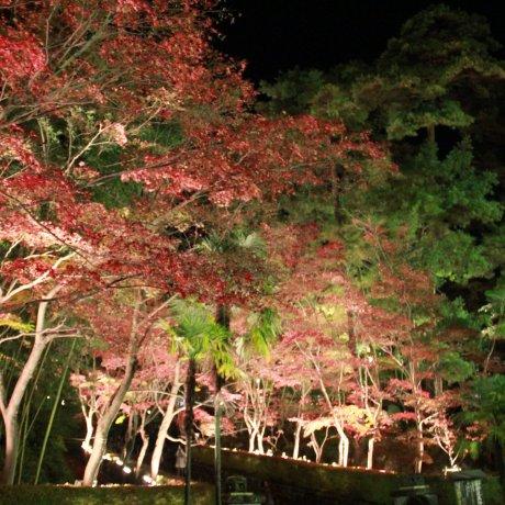 Shounsanso Autumn Leaves Light-up