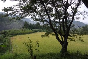 愛媛県喜多郡内子町大瀬南 喜田村地区の水田