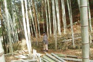 山林の管理で「竹」「木材」を道具や薪に加工し利用