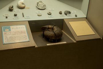 This ammonite was just one of the many fossils the museum urges you to touch at the Osaka Natural History Museum near Nagai Park