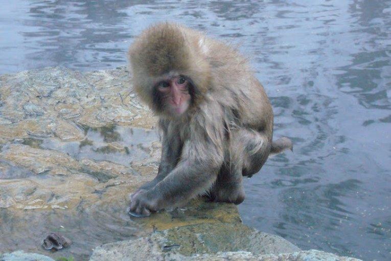 원숭이 공원 - 지고쿤다니