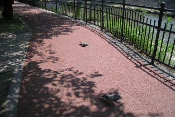The river walkway is lovely but watch out for the resting pigeons!