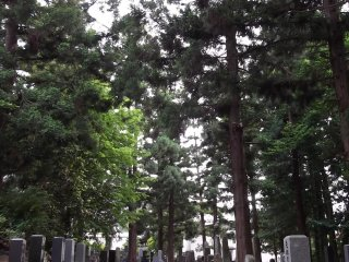 There's a large, tranquil forest graveyard