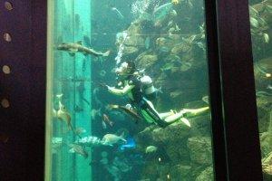城崎海洋世界