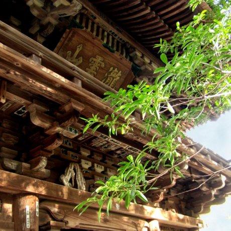 Taisan-ji Temple in Matsuyama