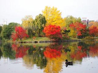 L'étang central, qui attire de nombreux photographes enthousiates