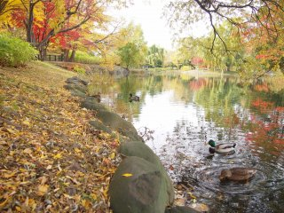 Les bords de l'étang couverts de feuilles