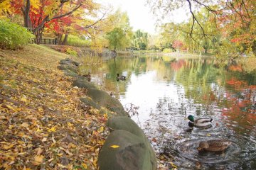 The edge of the pond littered with leaves.