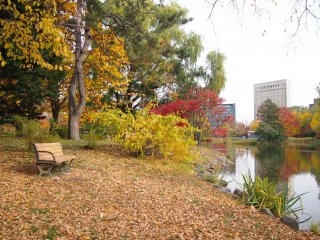 It's simple pleasure to sit on the park bench and watching ducks in the pond.