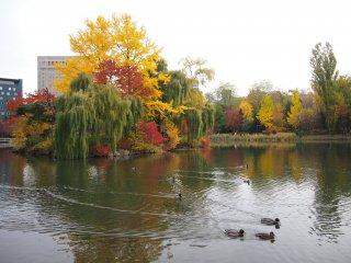 Un groupe de canetons dans un des plus petits étangs