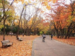 The walk through the Maruyama Park to the shrine is very enjoyable on a sunny autumn day.