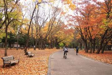 <p>The walk through the Maruyama Park to the shrine is very enjoyable on a sunny autumn day.</p>