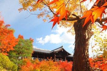 來京都賞楓絕不能忘記東福寺通天橋美景