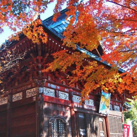 Autumn at Shimabuji Temple