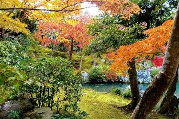 <p>Autumn leaves in Hyakka-en Garden</p>