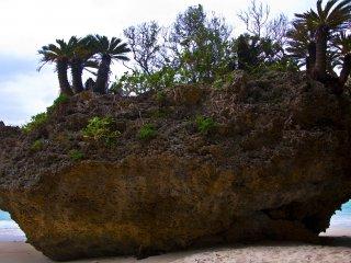 Những cây cọ mọc trên đỉnh vách đá