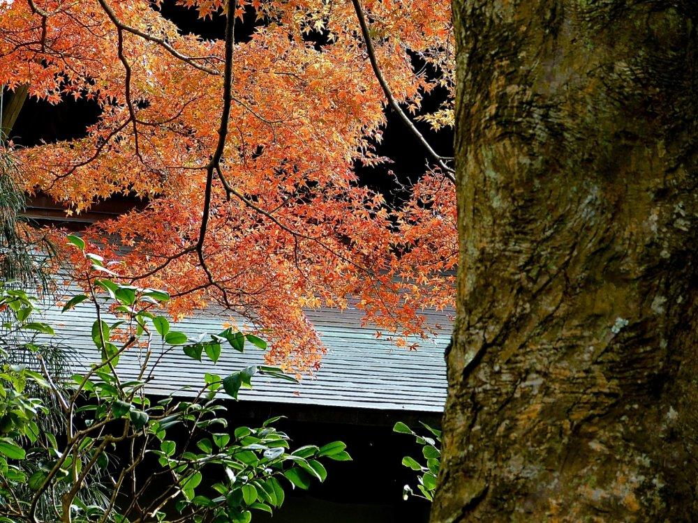 As folhas de outono abraçam o jardim